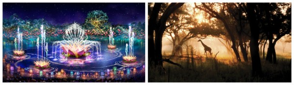 Visit Disney Animal Kingdom at Night 2016