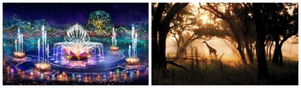 Visit Disney Animal Kingdom at Night 2016