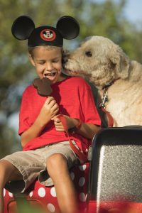 dogs at disney world